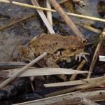 2015-04-27 herpetolog24
